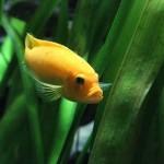fish-320914_640