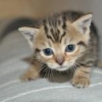 kitten-216019_640