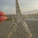 starfish-570469_1280