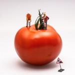 tomato-546989_1280