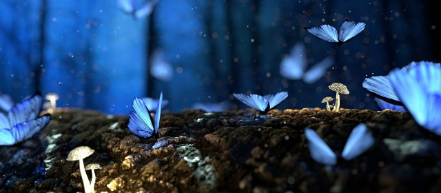 Blue Morpho Love